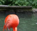 Flamingo2_19 kl